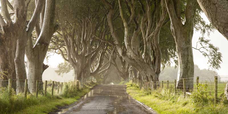 Dark Hedges, Stranocum
