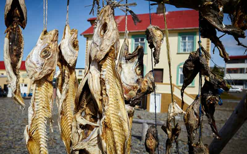 Fish drying in Iceland.
