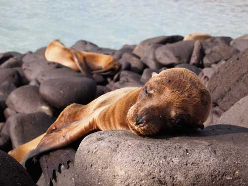 Wildlife holidays, Galápagos