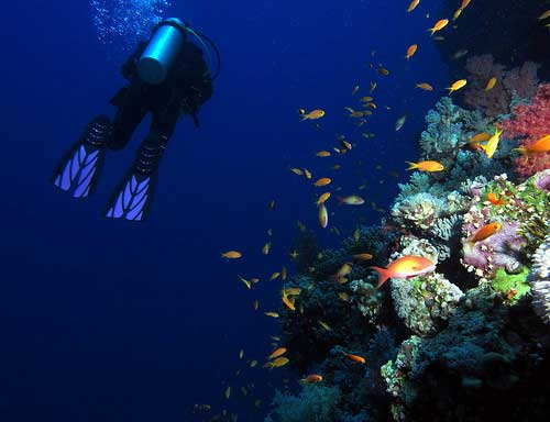 Adventure holidays, scuba diving Red Sea