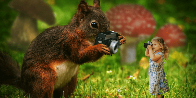 Squirrel Camera