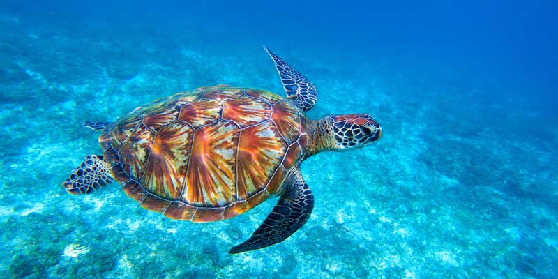 Animals like turtles suffer from plastic being thrown into our oceans