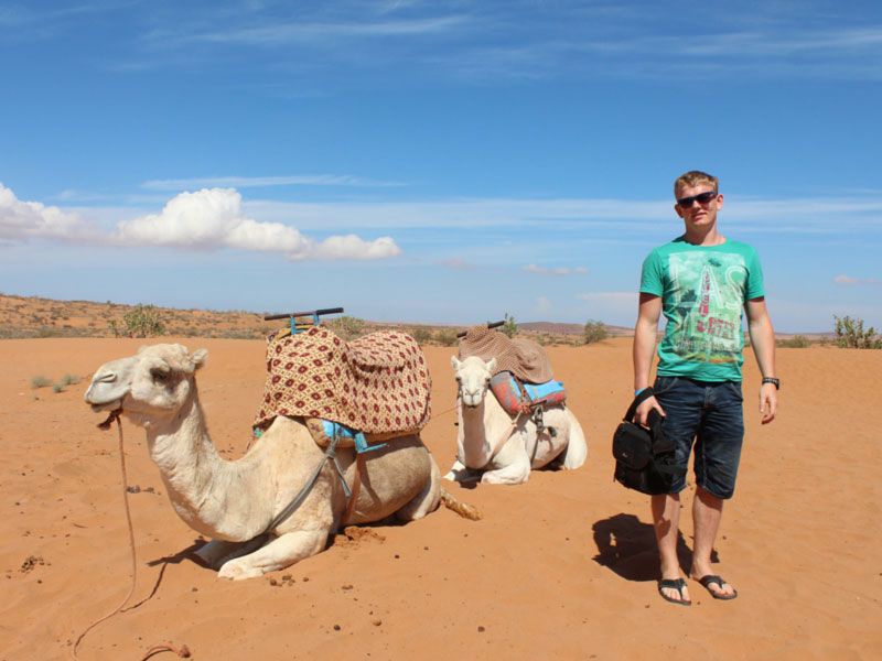 Tourist with camels in Morocco