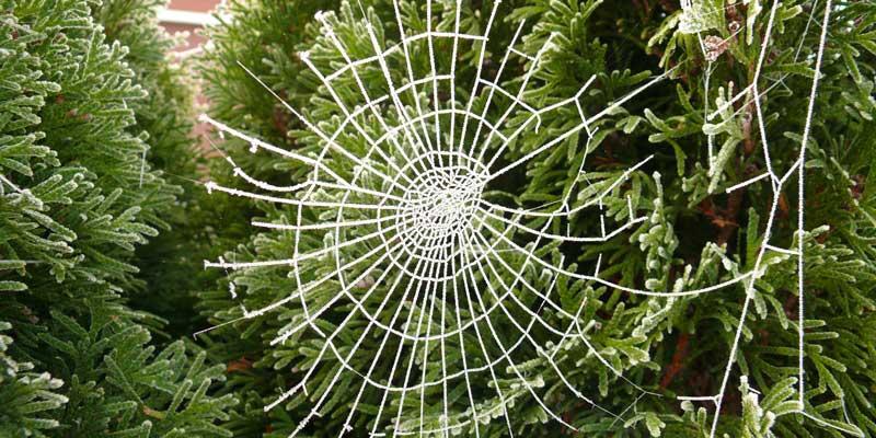 Christmas spiderweb