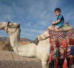 Noah on a camel